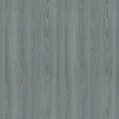 R55057, сосна якобсен голубой